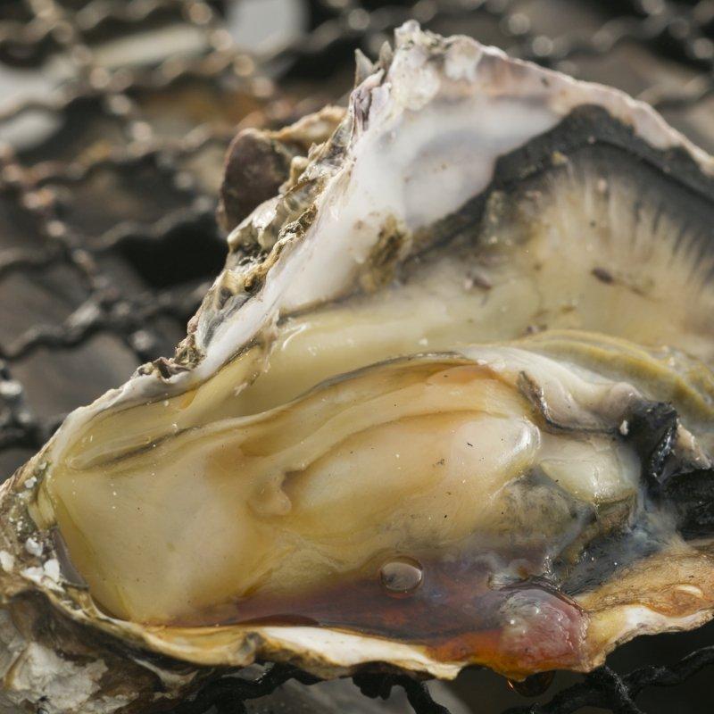 5009 広島産 牡蠣殻付き バーベキュー【10個】