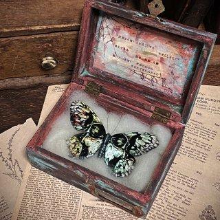 【913WORKS】蝶と箱のオブジェ 骸骨 M